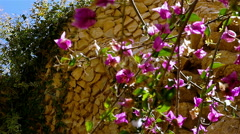 Flowers under bird nests in the terrace walls in Gaudi's Park Guell, Barcelona Stock Footage
