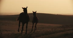 Adult horse and foal silhouette, running across the field, slow motion, Golden Stock Footage