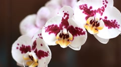 Beautiful gentle orchid flowers Stock Footage