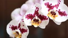 Beautiful gentle orchid flowers Stock Footage