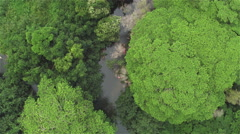 AERIAL: Flying over magnificent jungle canopies and beautiful curving river Stock Footage