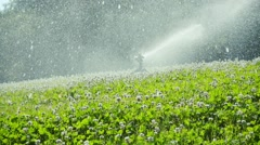 Water sprinkler on the lawn, slow motion Stock Footage