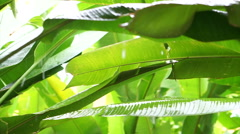 Tropical rain, rainfall in jungle forest. Green leaves background Arkistovideo