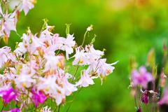 Pink delicate flower meadow, summer day Stock Photos