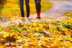 A man and a woman go through the leaves Stock Photos