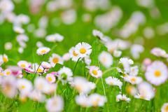 Delicate white flowers Stock Photos