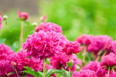 lush flower beds in the garden - stock photo