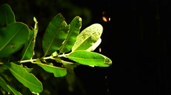Rain drop on the leaf at night Stock Footage