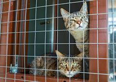 Two cats in the shelter Stock Photos