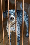 Two dogs at the shelter - stock photo