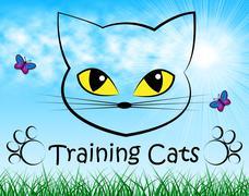 Training Cats Showing Feline Teaching And Kitten Stock Illustration