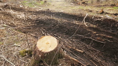 The stump of a felled tree - stock footage