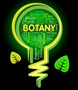Botany Lightbulb Meaning Rural Eco And Natural - stock illustration