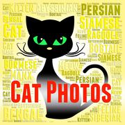 Cat Photos Means Feline Picture And Snapshots Stock Illustration