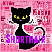 Shorthair Cat Represents Feline Puss And Purebred Stock Illustration
