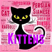 Kittens Words Represents Domestic Cat And Young - stock illustration