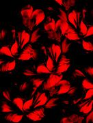 Red flower on black background. Painting and computer collage Stock Illustration