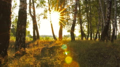 Walking in Birch Grove on gimbal against the sun . Making lens flare . Stock Footage