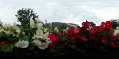 360Vr Video Red and White Flowers Yellow Middles Building Background Green Oval Stock Footage
