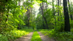 Car riding on the forest road . Gimbal flying through the trees. Stock Footage