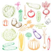 Sketch icons of freshly harvested vegetables - stock illustration