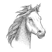 Lively little horse of arabian breed, sketch style - stock illustration