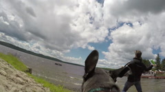 Camera mounted on dog playing fetch in the water - chasing a toy Stock Footage