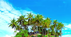 Tropical island with palm trees on blue summer sky Arkistovideo