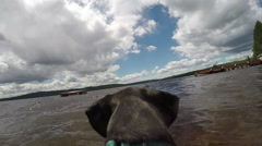 Dog playing fetch in the water - chasing a toy Stock Footage