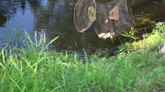 Fisherman throwing fishing basket into pond, 4K Stock Footage