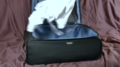 Woman Getting Ready For A Trip, Packing In A Hurry - stock footage