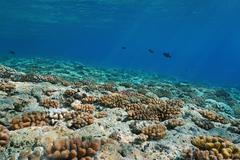 Underwater landscape fore-reef slope Pacific ocean - stock photo