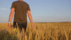 The young man goes along a field of rye Stock Footage