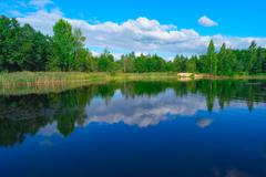 Forest lake and blue cloudy sky - stock photo