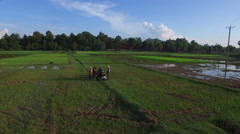 Aerial view of farmers finishing work in rice paddies Stock Footage