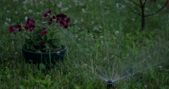 Garden Irrigation Sprinkler Watering Lawn and Flowers Stock Footage