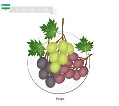 Ripe Grape, A Popular Fruit in Uzbekistan - stock illustration