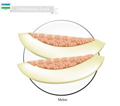 Ripe Melon, A Popular Fruit in Uzbekistan - stock illustration
