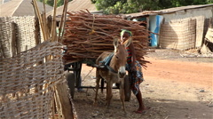 Africa girl and wood cart-wheel drive vehicle animal donkey Stock Footage