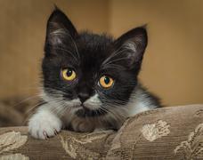 lovely kitten on a sofa - stock photo