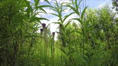 Green grass swaying wind. Summer. Landscape. Stock Footage