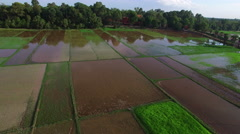 Wide aerial view of semi submerged rice paddies. Stock Footage