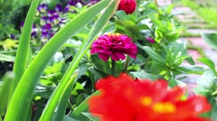 Flowerbed garden flowers Stock Footage