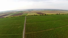 Beautiful vineyards landscape in summer colors, aerial view Stock Footage