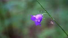 Spider on the purple flower Stock Footage