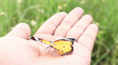 Butterfly flying from hand Stock Footage