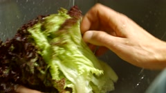 Man's hands washing lettuce leaves. Stock Footage