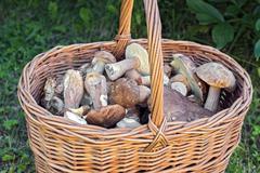 Basket of edible mushrooms Stock Photos