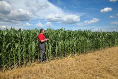 Farmer or agronomist inspect corn field using tablet - stock photo