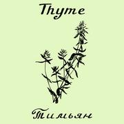 Vector hand drawn thyme illustration. Botanical drawing - stock illustration